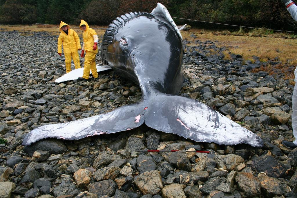 Are Solar Storms Causing Mysterious Sea Animal Beachings?